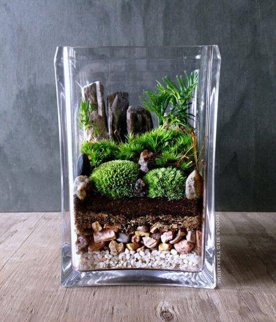 terrario camadas vaso quadrado