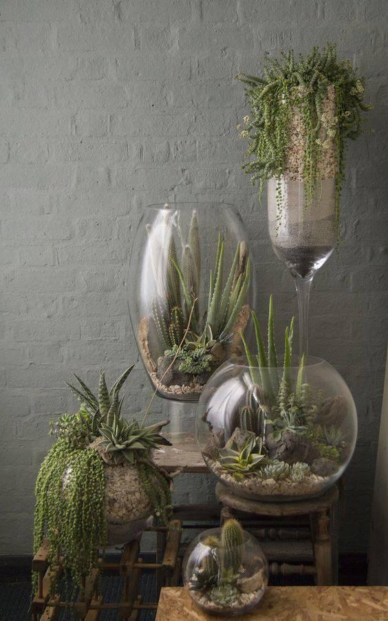 terrario composicao com suculentas e vasos