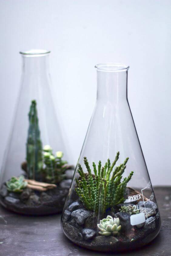 terrario criativo suculentas e pedras em frasco
