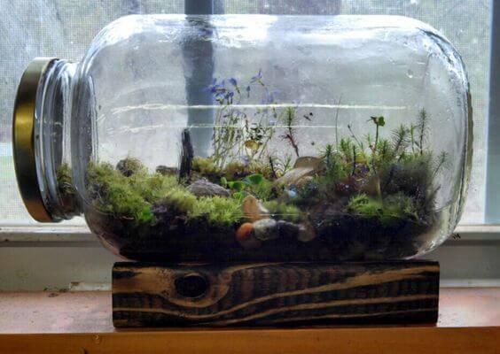 terrario em pote fechado mini plantas