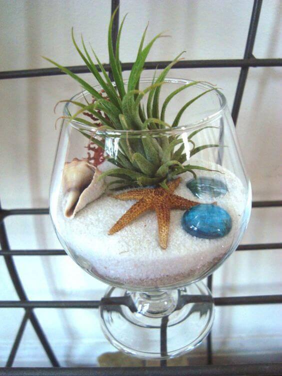 terrario em taça estrela do mar