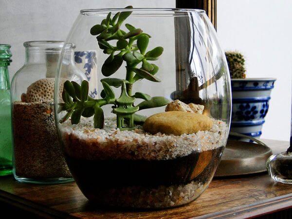 terrario em vaso alto mesa de madeira