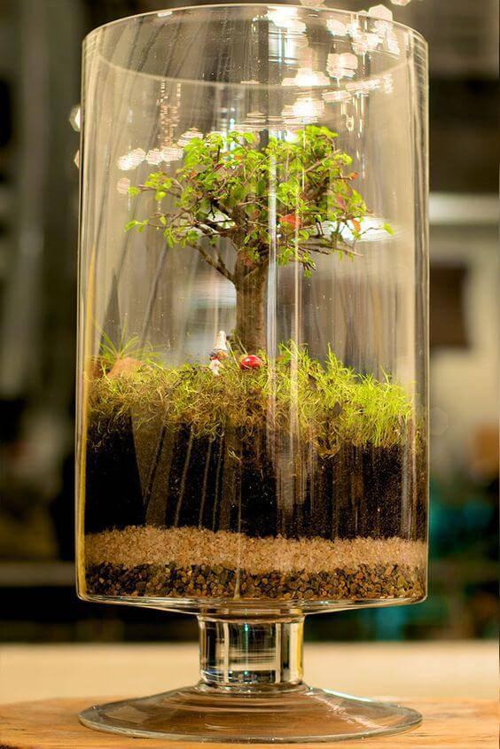 terrario em vaso com pe bonsai