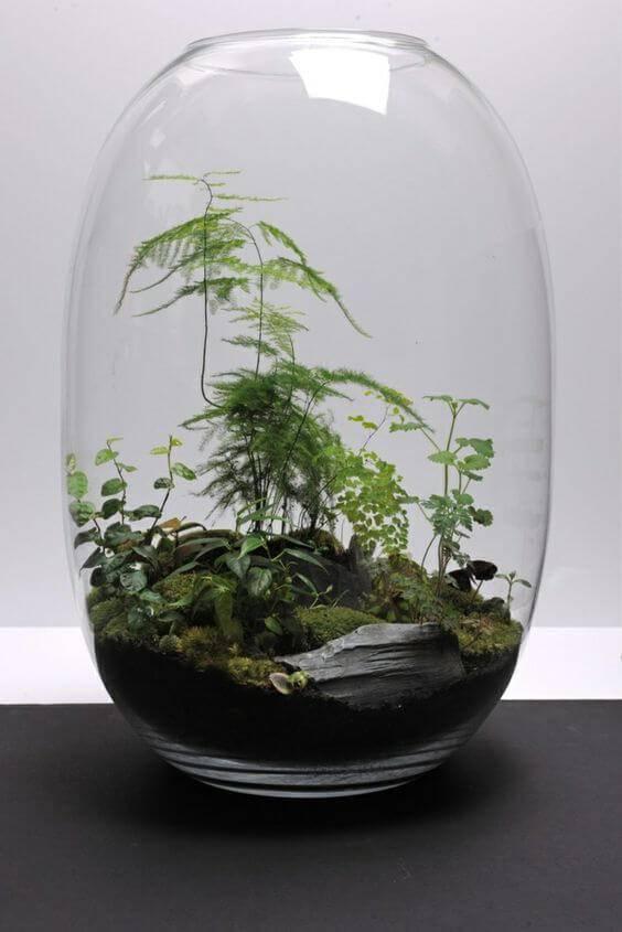 terrario em vaso oval com pedra