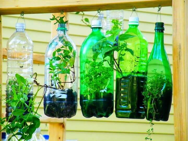 horta suspensa com garrafas pet