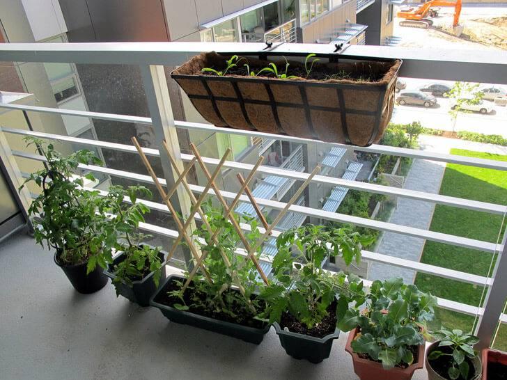 horta suspensa na varanda com fibras