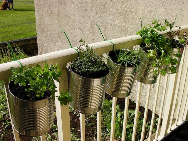horta suspensa na varanda com latas