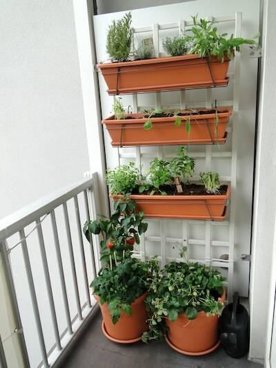 horta suspensa na varanda com vasinhos
