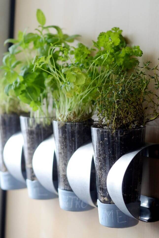 horta suspensa nos copos