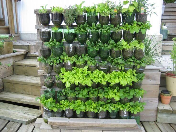 horta suspensa vertical com garrafas