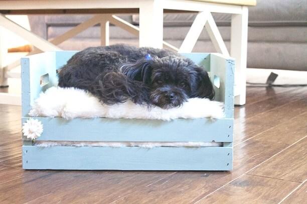 Caixote de feira como cama de cachorro