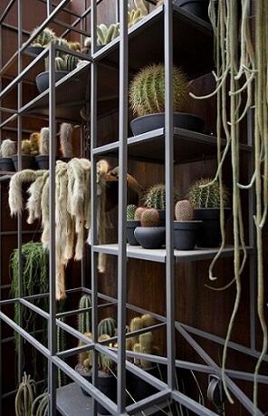 Cactos podem ser ótimas plantas para jardim Projeto de Sandra Moura