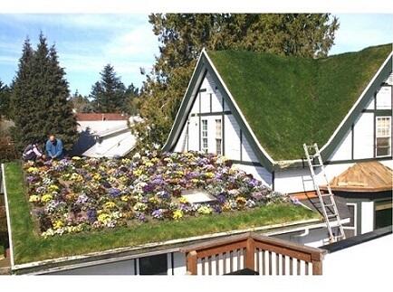 Casa com telhado verde com flores
