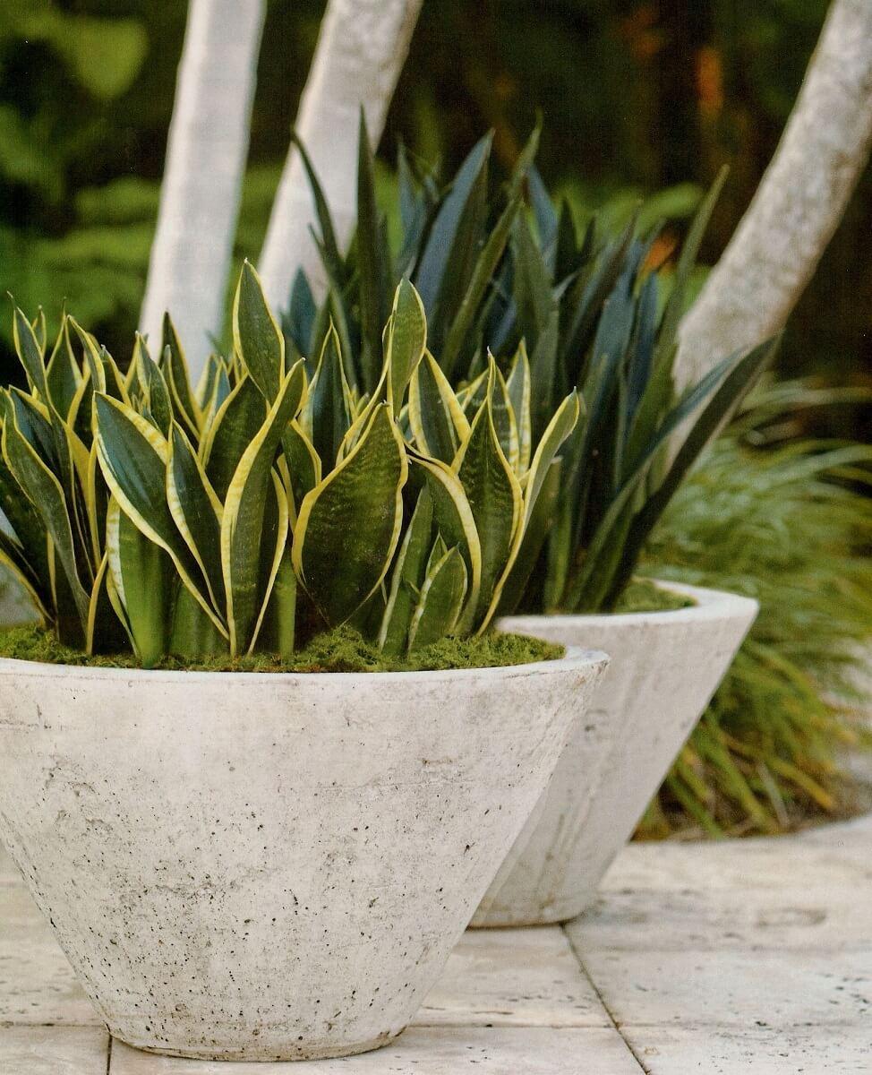Decoração de jardim com vaso de espada de São Jorge