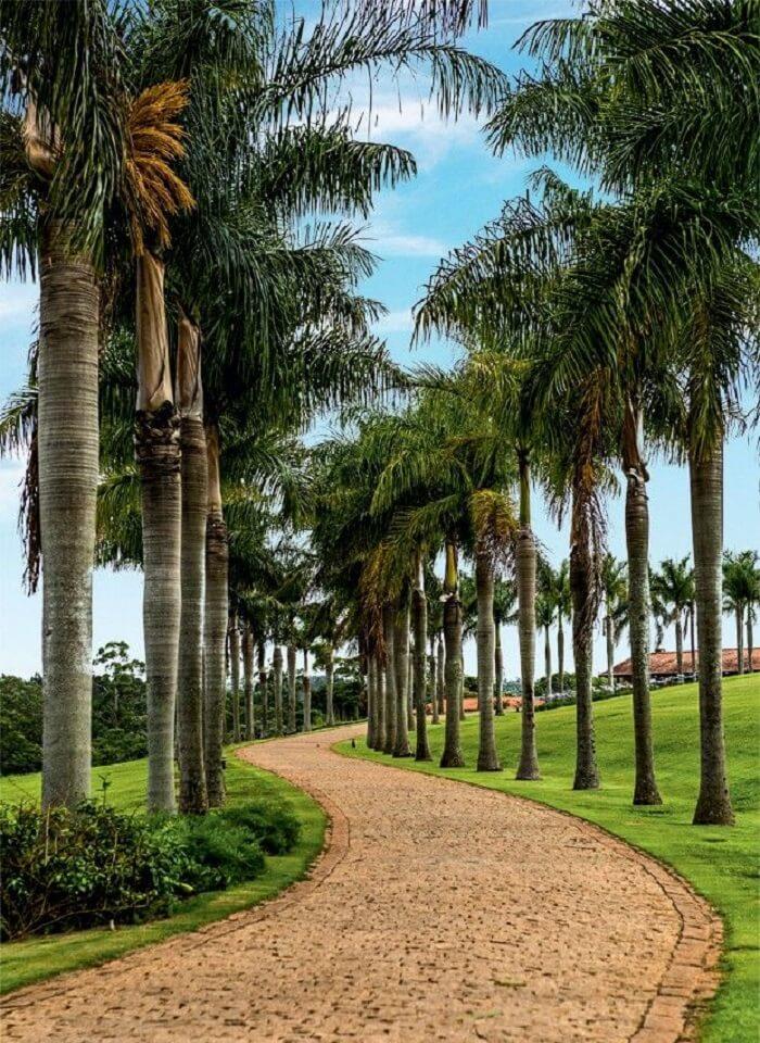 Entrada triunfal com palmeiras para casa de fazenda