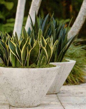 Espada de São Jorge mini em vaso de concreto