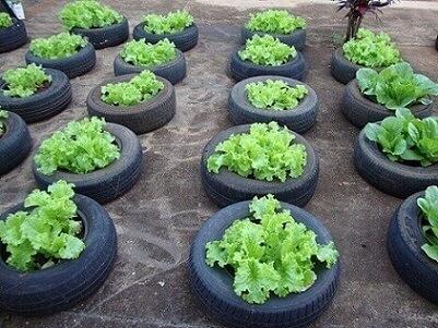 Horta de alfaces feita com artesanato com pneus