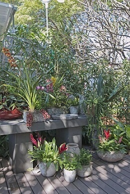 Plantas para jardim com vasos Projeto de Joia Bergamo