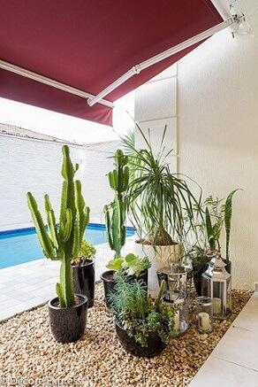 Plantas para jardim em vasos Projeto de Camila Badaro