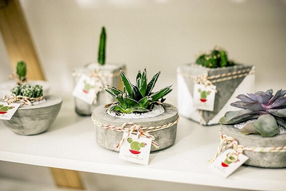 Plantas para jardim mini em vasos de cimento Projeto de Casa Aberta