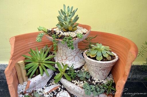 Plantas para jardim suculentas Projeto de Vital Paisagismo