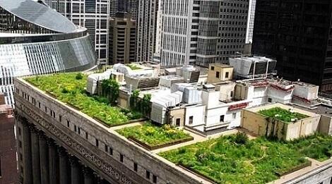 Prefeitura de Chicago com telhado verde