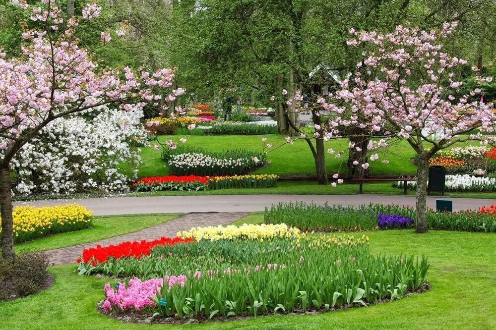 flores coloridas para jardim