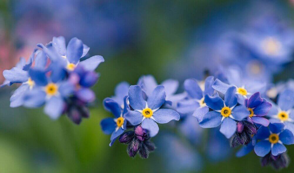 flores pequenas para jardim