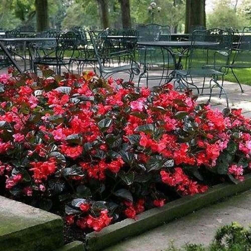 flores vermelhas para jardim
