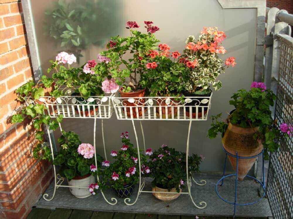 modelos de flores coloridas para jardim