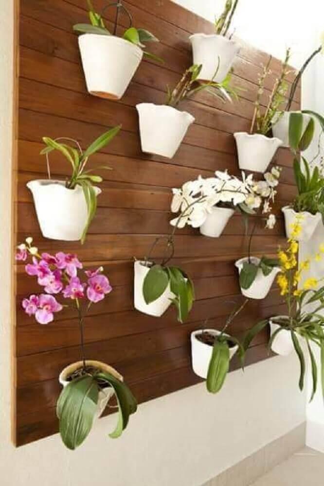 orquídeas para jardim vertical