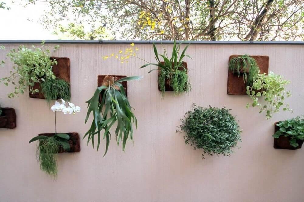 orquídeas - tipos de flores para jardim vertical