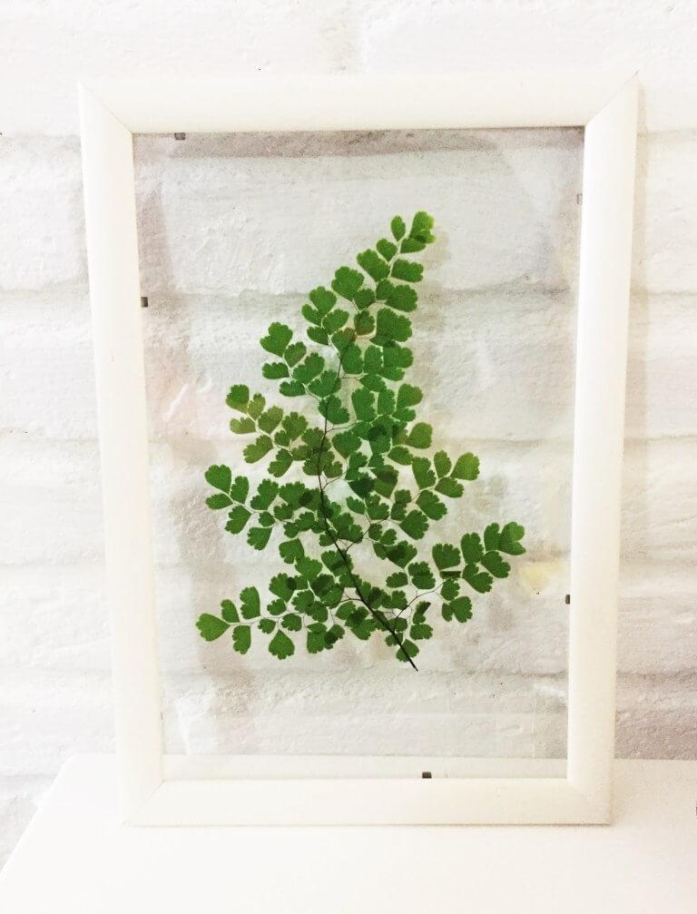 quadro-de-folha-natural-10