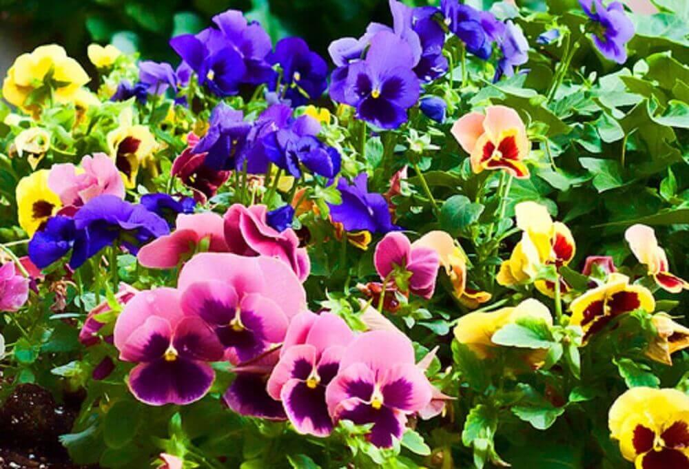 tipos de flores para jardim de inverno