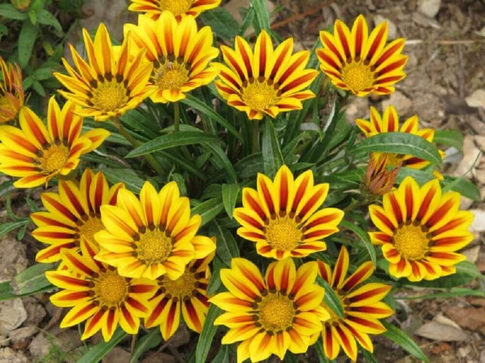 tipos de flores para jardim o ano todo