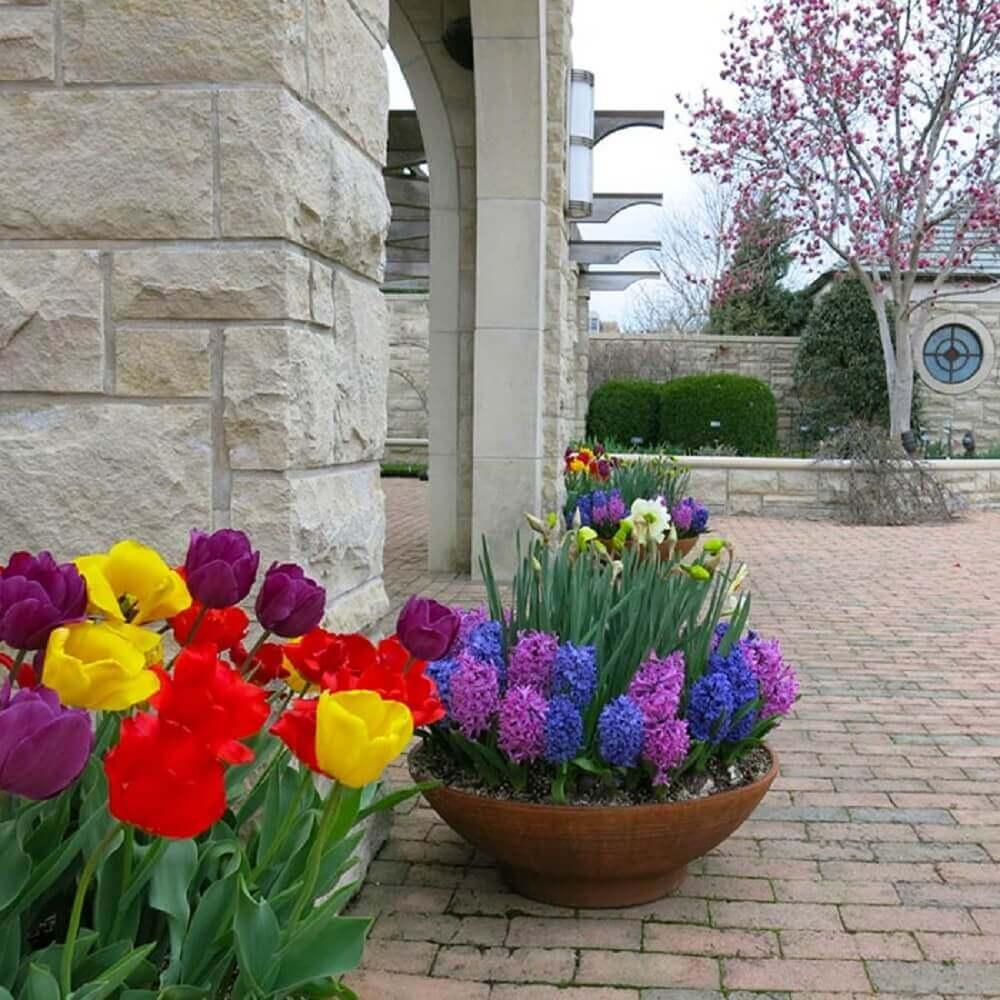 Vaso com flores coloridas para jardim