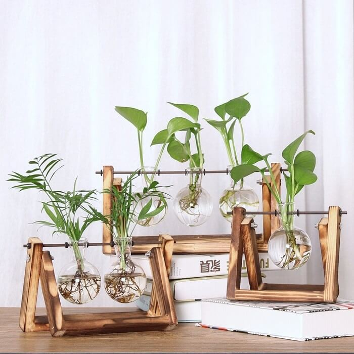 Vasos de plantas com design ousado