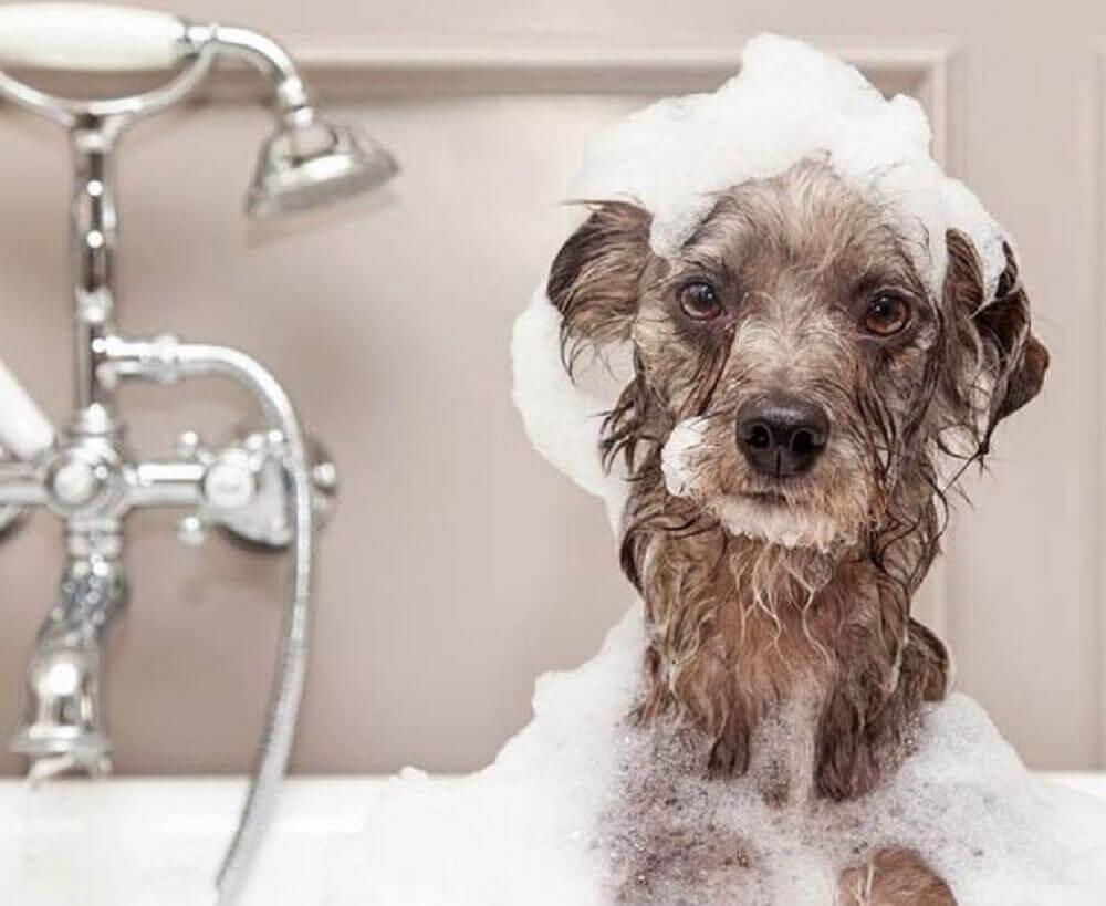 cachorrinho tomando banho