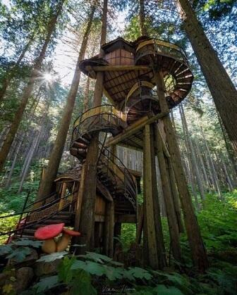 Casa na árvore com escada em volta de árvore