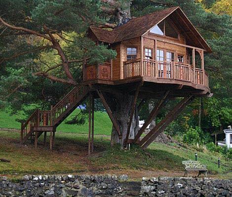 Casa na árvore em uma só árvore