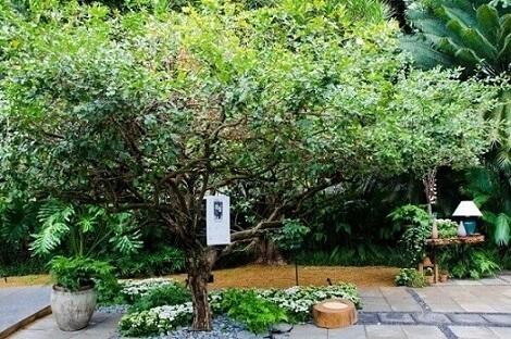 Como fazer um jardim com árvore e flores Projeto de Alalou Paisagismo