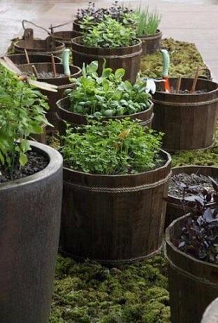 Como fazer um jardim pequeno Projeto de Juliana Freitas