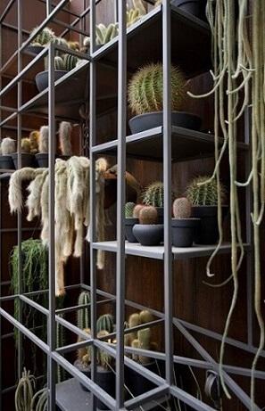 Como fazer um jardim vertical de cactos Projeto de Sandra Moura