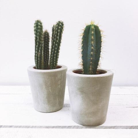 Como fazer vaso de cimento para cactus