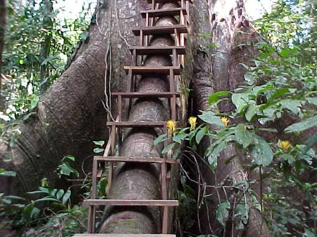 Ladder model that gives access to the treehouse