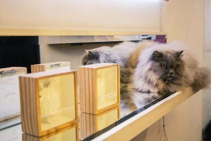 Prateleira de vidro com objetos decorativos Projeto de Casa Aberta