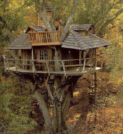11 -Casa na árvore alta