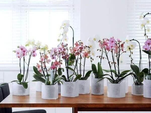 Como cuidar de orquídea em vasos
