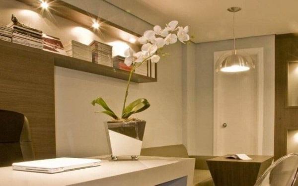 Como cuidar de orquídea espaço fechado
