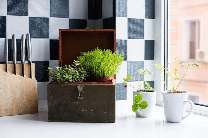 Mini horta em casa em caixa Foto de Pinterest